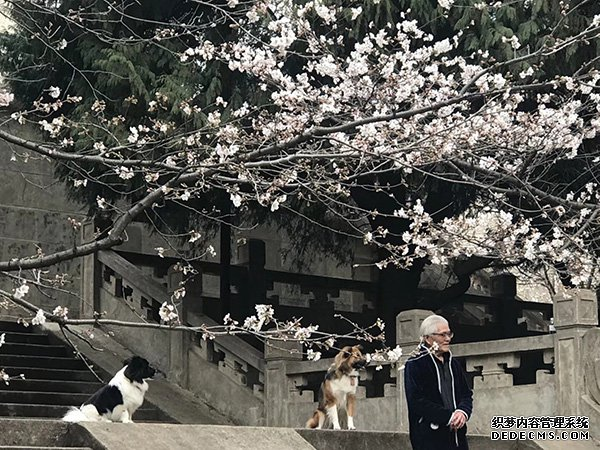 樱花季来了:武大引入高科技防黄牛,全国多所高校赏樱缤纷