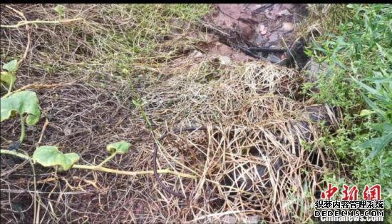 高盐废水外排导致排口周边植物死亡。四川省生态环境厅供图