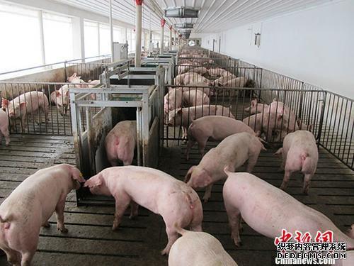 银保监会:加大生猪养殖等全产业链信贷投放力度